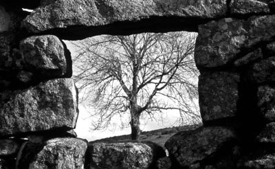 Window & Ash Tree, Swincombe, Dartmoor.